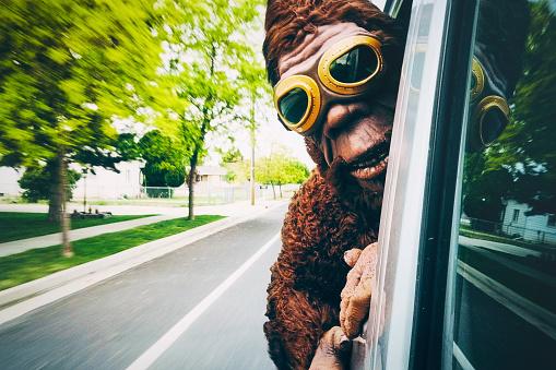Sasquatch Riding in a Car