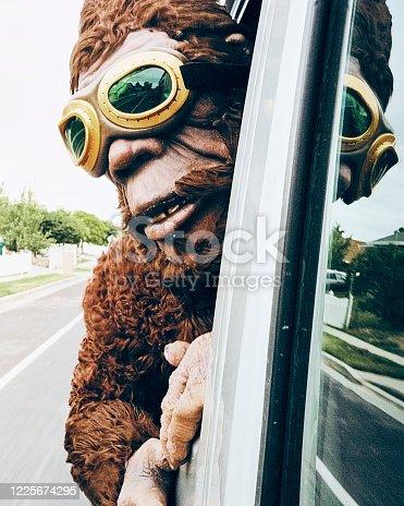 486524205 istock photo Sasquatch Riding in a Car 1225674295