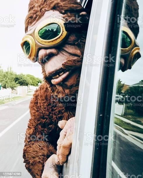 Sasquatch riding in a car picture id1225674295?b=1&k=6&m=1225674295&s=612x612&h=h5vegzrf7bapllttcnx4urnbde fidsgen8gbug2q s=