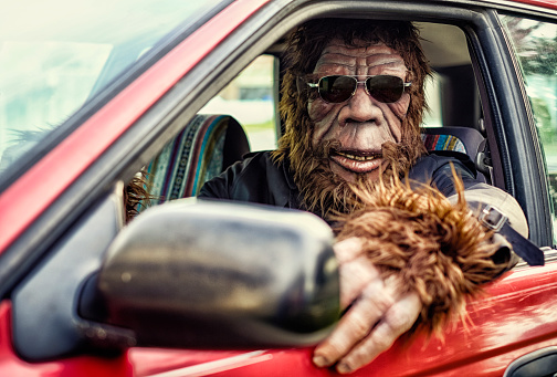 A Sasquatch Bigfoot gorilla type character driving a small car. Processed with a retro/vintage look. Suit is custom made with property release from creator.
