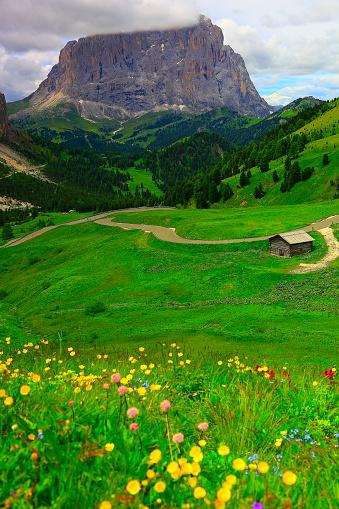 Sassolungo spring flowers, Gardena pass, Dolomites, Italian Tirol alps