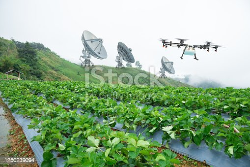 898449496 istock photo Satellite for agriculture with drone fly to spray fertilizer on the strawberry fields, Technology smart farm concept 1250239094