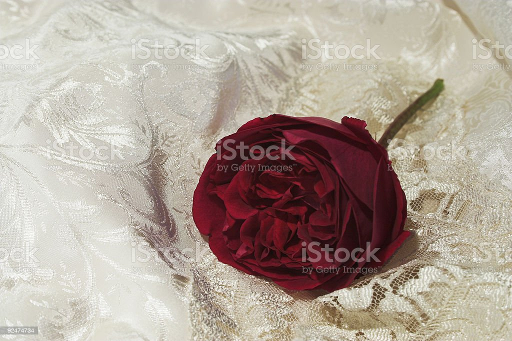 satin lace and red rose 2 royalty-free stock photo