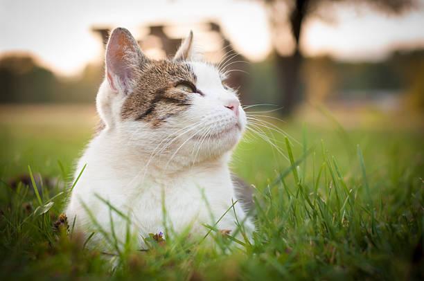 Satisfied cat picture id153872790?b=1&k=6&m=153872790&s=612x612&w=0&h=krnqmx49rbemj9luspedtcqm4tzv3erafx3y5qwamzs=