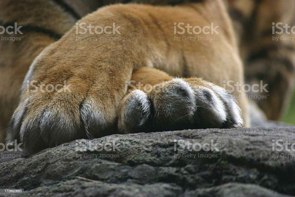 Satisfied tiger royalty-free stock photo