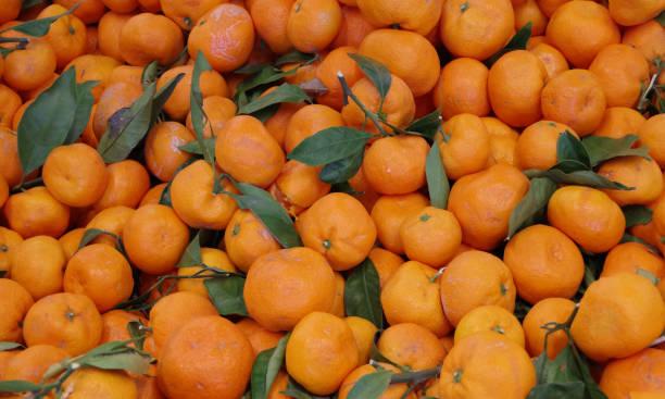 Satsuma Mandarins stock photo
