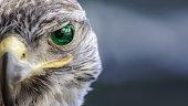 Saudi Arabia flag on Eagle eye with dispalce and mask