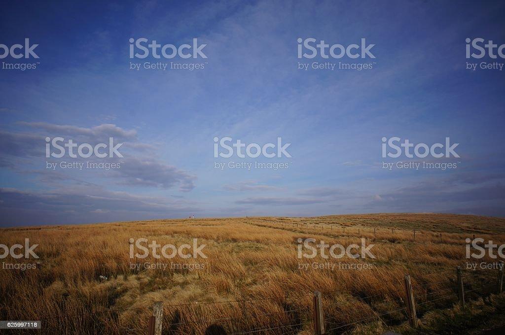 Savana with blue sky stock photo
