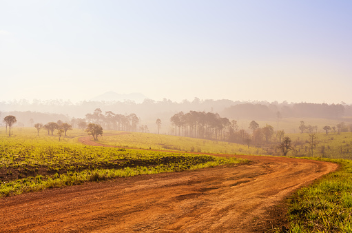 Savanna In National Park Of Thailand Named Thung Salaeng Luang Stock Photo - Download Image Now