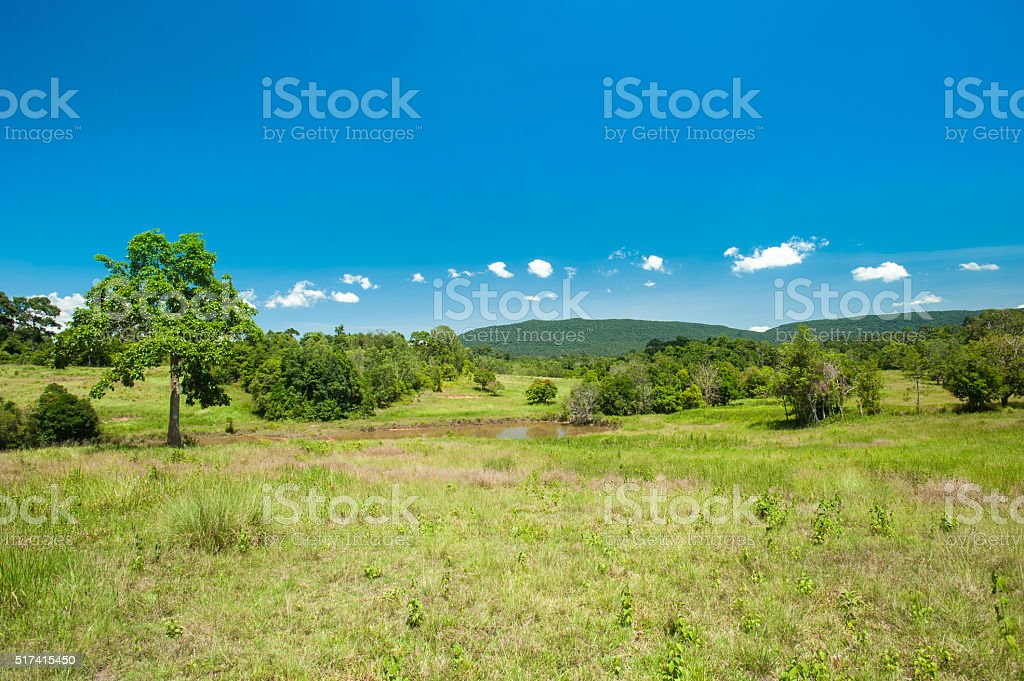 savanna landscape at Khaoyai National Park ,Thailand stock photo