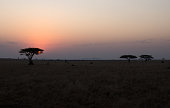 Landscape sunset in the Serengeti.