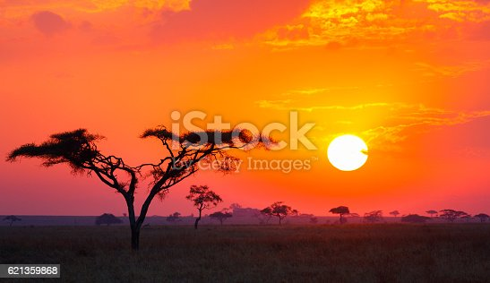 Savanna Sunrise and Acacia Tree