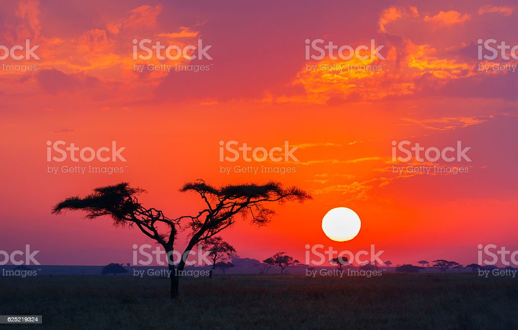 Savanna Sunrise and Acacia Tree in Tanzania Africa stock photo