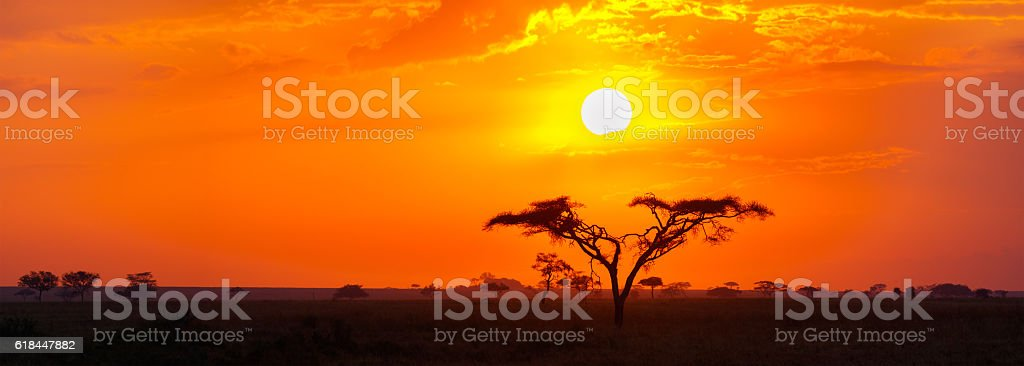 Savanna Sunrise and Acacia Tree in the Serengeti, Tanzania Africa stock photo