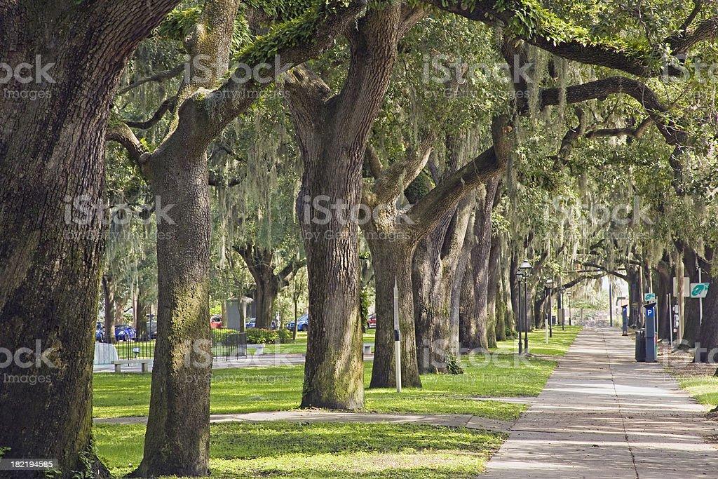 Savannah GA: Emmet Park, Trees and Spanish Moss royalty-free stock photo
