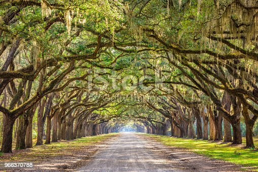 Savannah, Georgia, USA historic oak tree lined dirt road.
