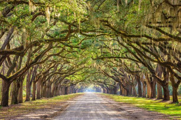 Savannah, Georgia, USA Historic Road Savannah, Georgia, USA historic oak tree lined dirt road. southern usa stock pictures, royalty-free photos & images