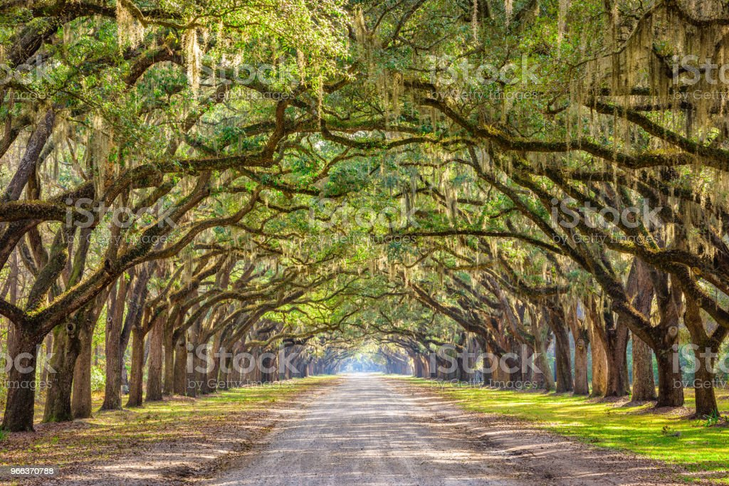 Savannah, Georgia, USA Historic Road stock photo