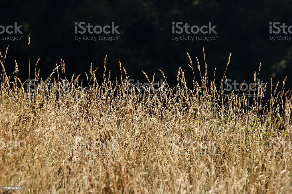 Savannah grass field in twinkle sunlight stock photo