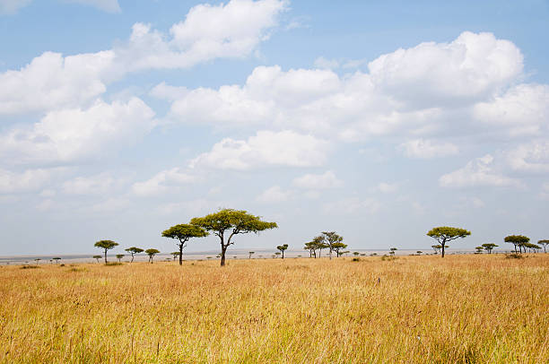 offene landschaft - afrikanische steppe dürre stock-fotos und bilder
