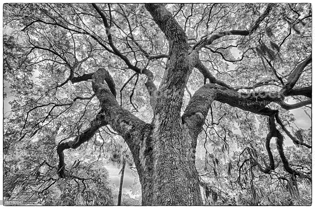 Savannah Oaks – Foto