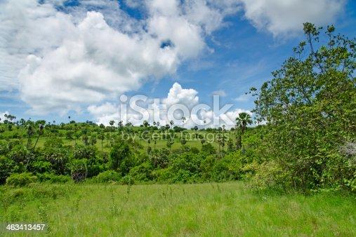 Savannah on the island of Komodo
