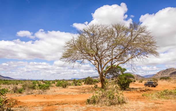 Savannah plains landscape in Kenya stock photo