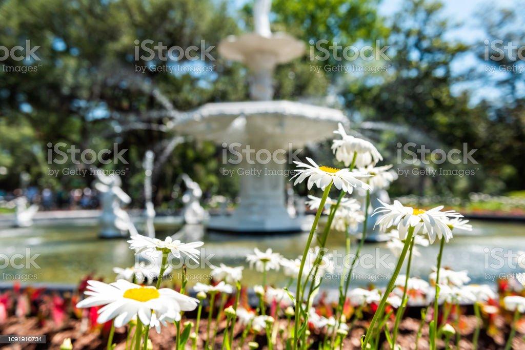 Fonte de água famosa Savannah, Estados Unidos da América no parque de Forsyth, Geórgia durante o dia de sol no verão com branco margarida flores closeup - foto de acervo