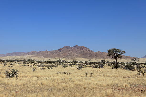 savannenlandschaft in namibia - afrikanische steppe dürre stock-fotos und bilder