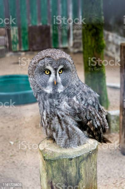 Save a bird save yourself cute owl bird with large eyes and hawk beak picture id1161725825?b=1&k=6&m=1161725825&s=612x612&h=1fgsmur5omjfqkp6vfridiueucdl2vgmr 05p1eqpps=