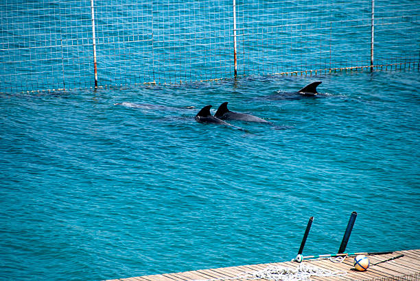 save dolphins - animals in captivity stock pictures, royalty-free photos & images