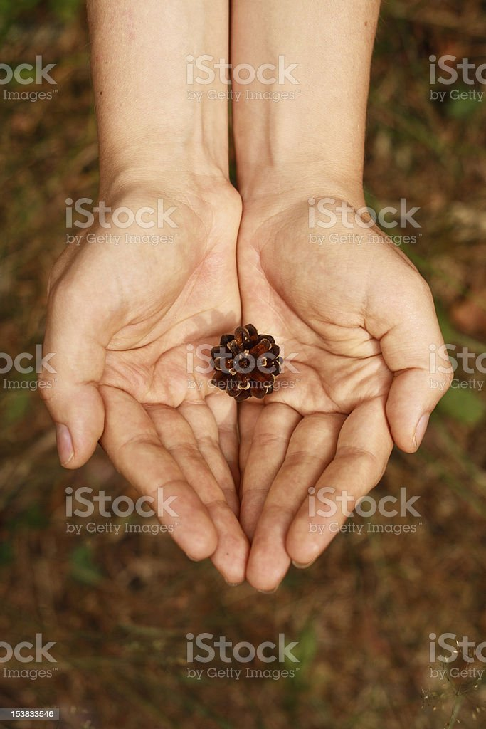Save forest stock photo