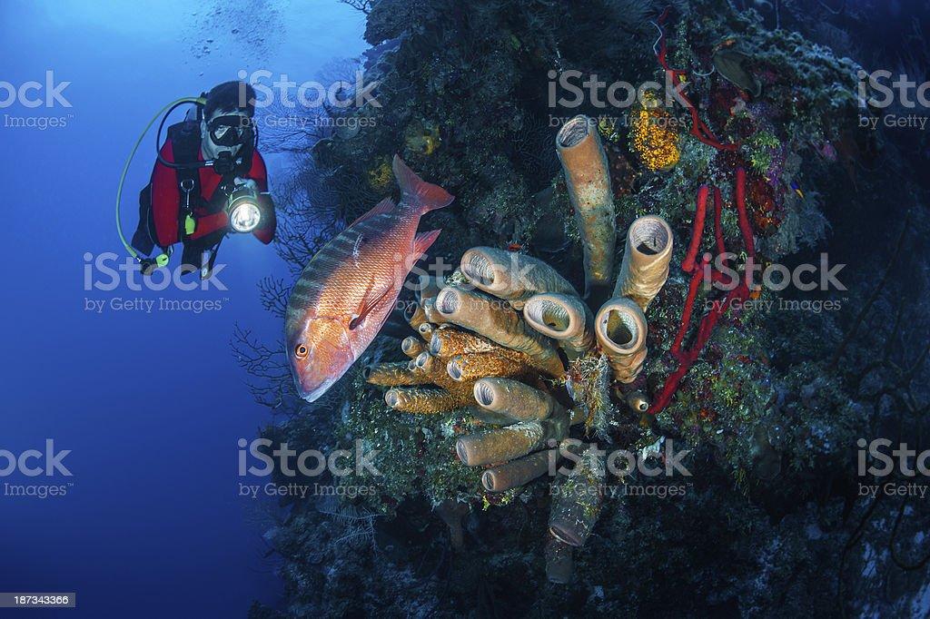 Save the sea life royalty-free stock photo