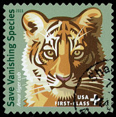 2011 United States postage stamp with an illustration of a tiger cub, representing a vanishing animal species.