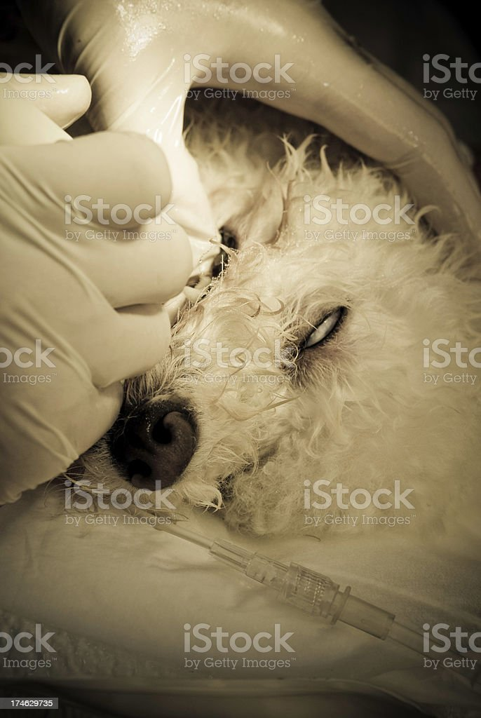 Saving dog life royalty-free stock photo