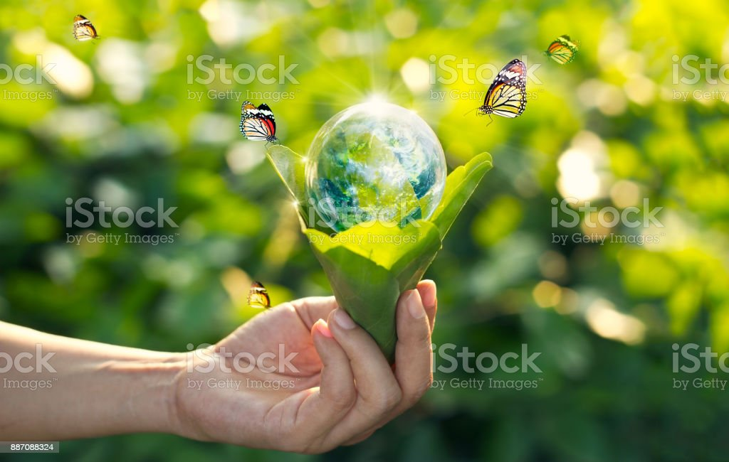 Saving energy concept, Earth day, Hand holding earth in light bulb against nature on green leaf with butterfly on green park background. Save the earth and Ecological, Element of this image furnished by NASA stock photo