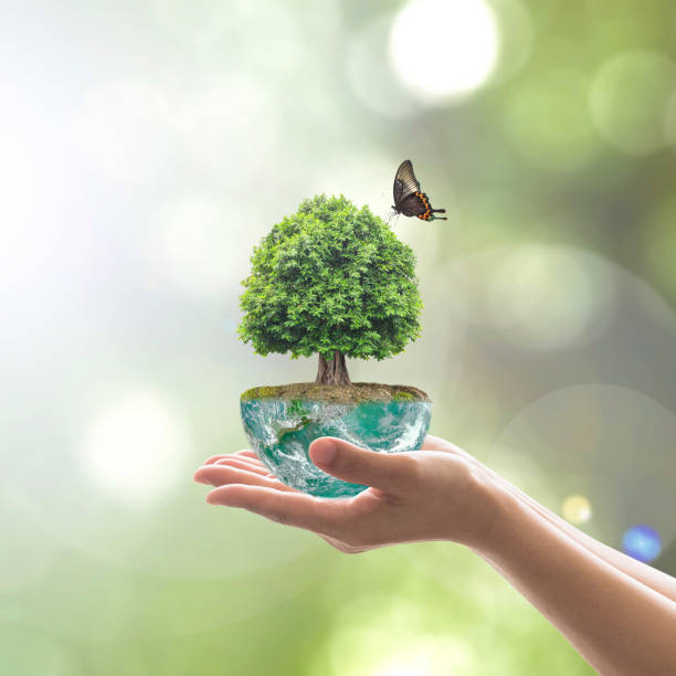 saving environment and natural conservation concept with tree planing on green globe earth on volunteer's hands: elements of this image furnished by nasa - teacher school solo imagens e fotografias de stock