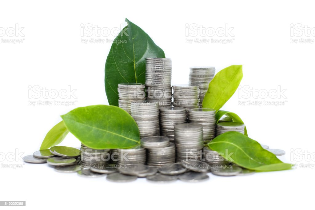 Saving money for your investment future (habit) is similar to growing green leaves on tree isolated on white background - saving & economical concept. stock photo