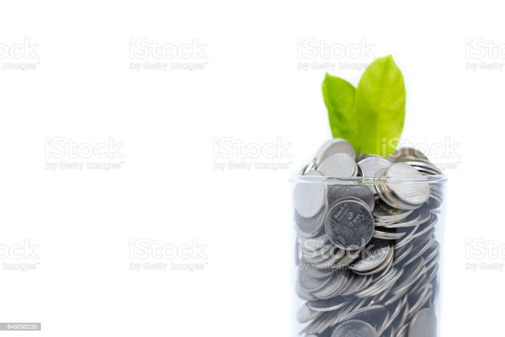Saving money in glass for your investment future (habit) is similar to growing green leaves on tree isolated on white background - saving & economical concept. stock photo