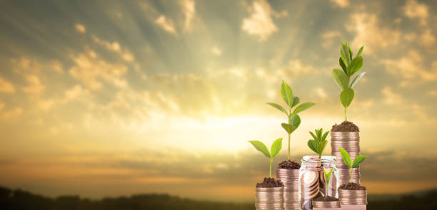 Saving money Saving money. Coins and blooming plants in jars. Investment concept money tree stock pictures, royalty-free photos & images