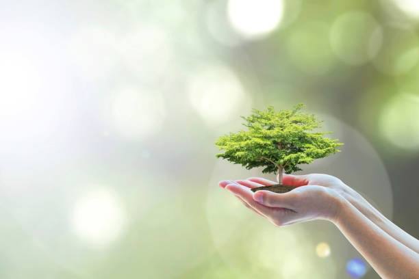 saving world natural environment and sustainable ecosystem with tree planting on volunteer's hand, education concept - teacher school solo imagens e fotografias de stock
