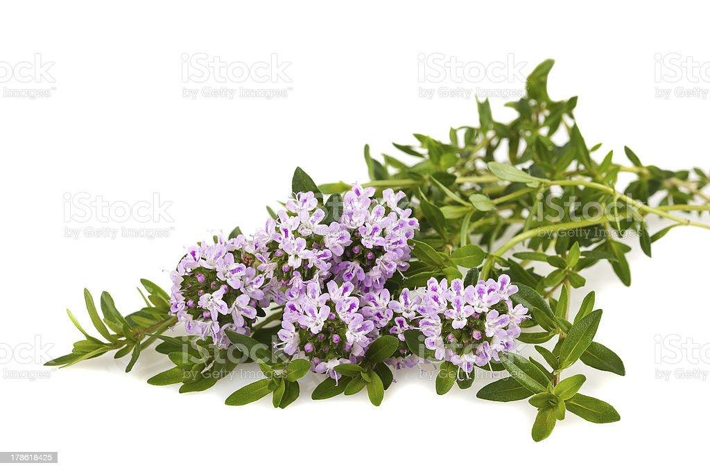 savory flowers stock photo