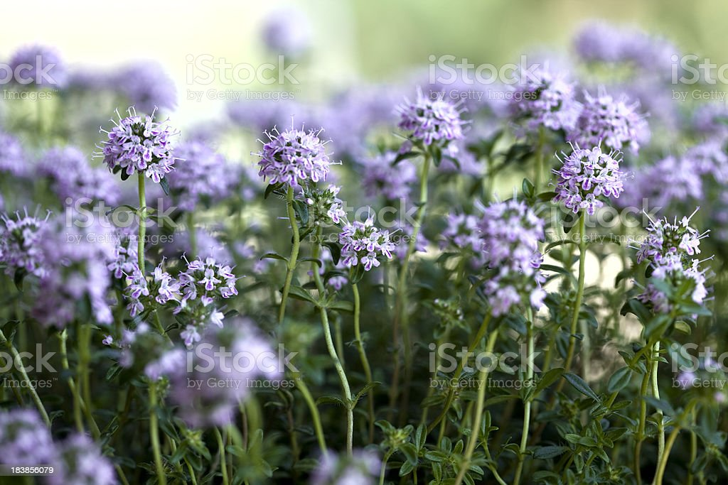 Pikantes in Blumen – Foto