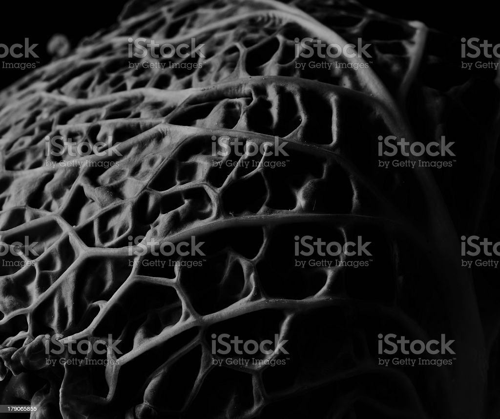Savoy cabbage black and white royalty-free stock photo