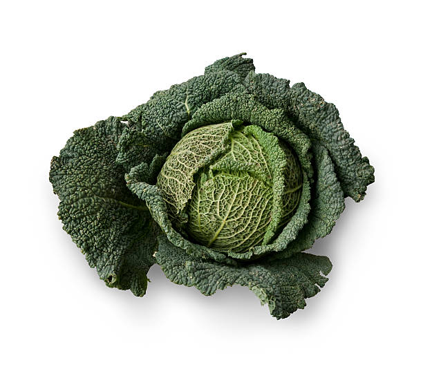 Savoy cabbage – Foto