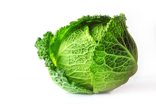savoy cabbage (brassica oleracea l. convar, capitata var., sabauda), isolated on white background. slows the growth of malignant tumors. add to your diet. selective focus, copy space. - cavolo foto e immagini stock