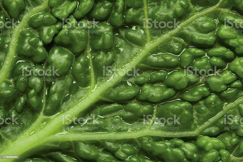 savoy cabbage leaf background royalty-free stock photo