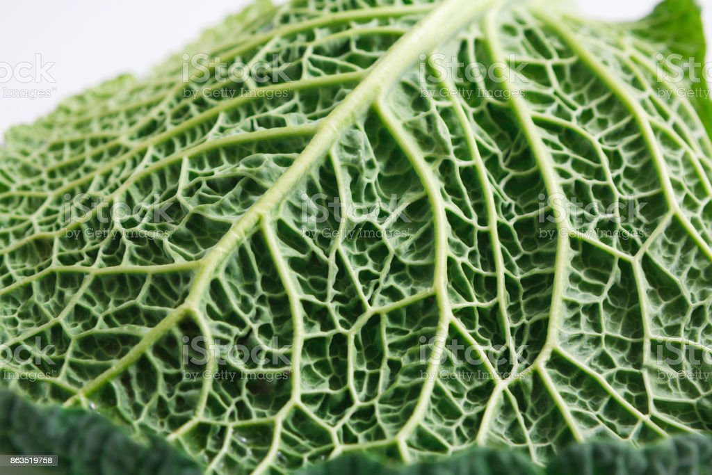 A Savoy Cabbage Leaf Closeup Texture Of The Cabbage Macro Stock Photo Download Image Now Istock