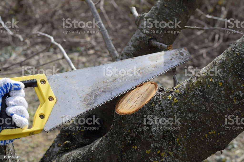 Cutting a tree branch with a hand garden saw. Saw a hacksaw at the...