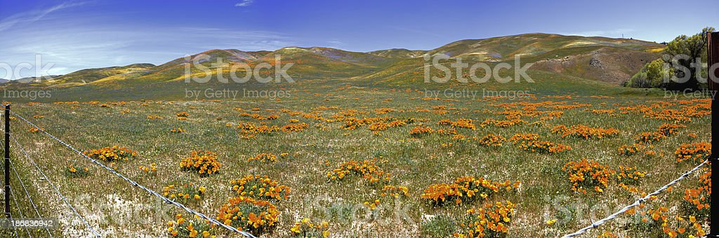 Saw it on the Grapevine stock photo